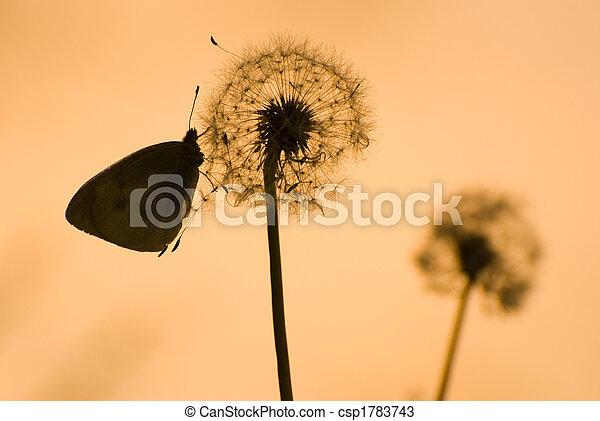 dandelion and butterfly under sunshine - csp1783743