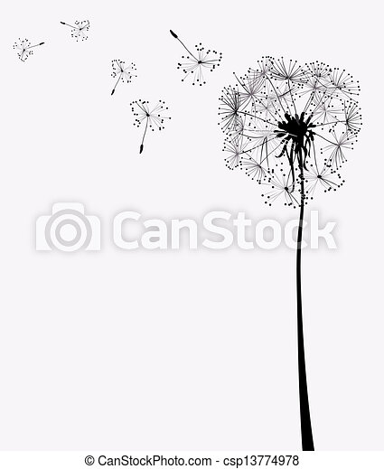 dandelion - csp13774978