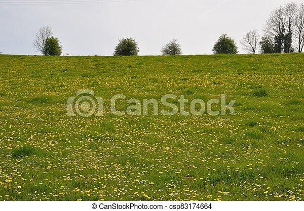 dandelion in a meadow - csp83174664