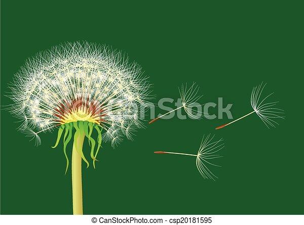 dandelion on a green background - csp20181595