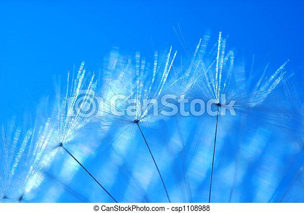 Dandelion seed - csp1108988