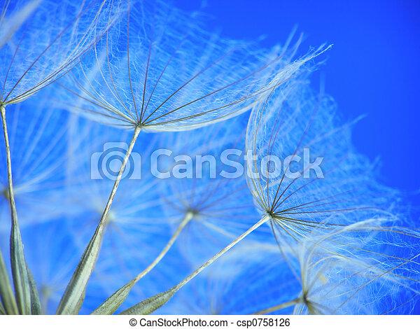 dandelion seed - csp0758126