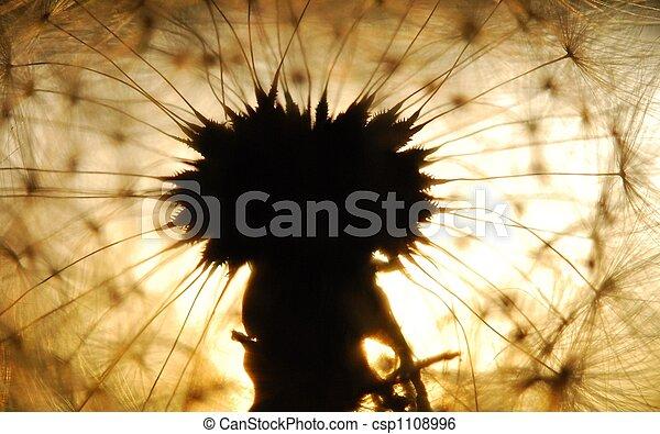dandelion seed - csp1108996