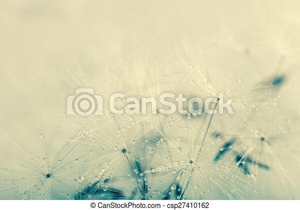 Dandelion seed - csp27410162