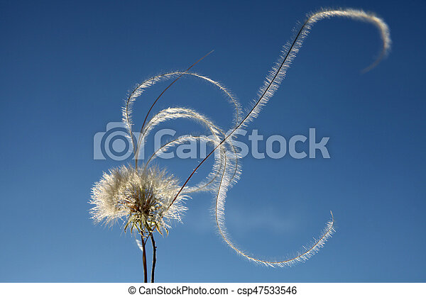Dandelion Seed - csp47533546