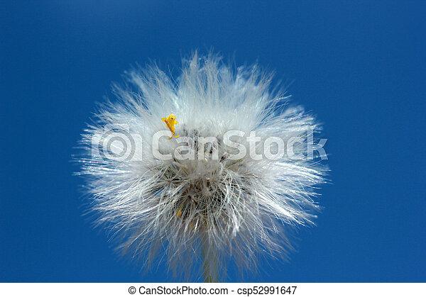 Dandelion Seed - csp52991647