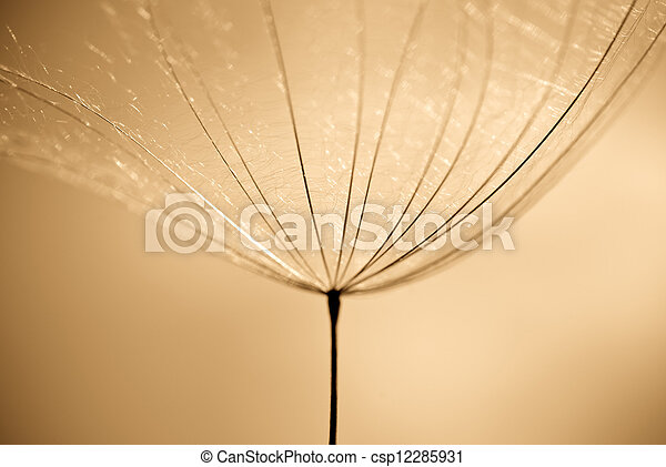 Dandelion seed - csp12285931