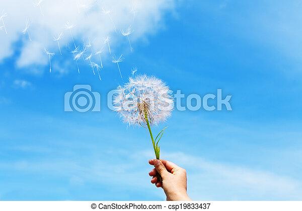 Dandelion seeds flying up - csp19833437