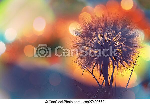 Dandelion - csp27409863