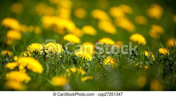 Dandelion - csp27251347