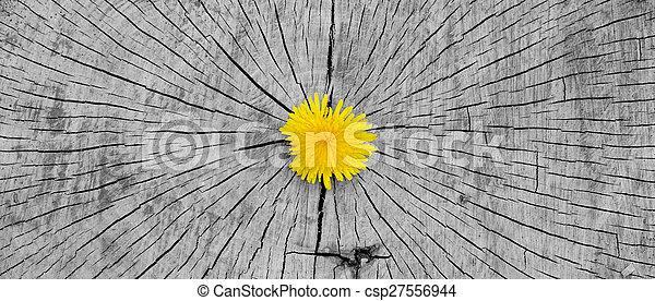 Dandelion - csp27556944