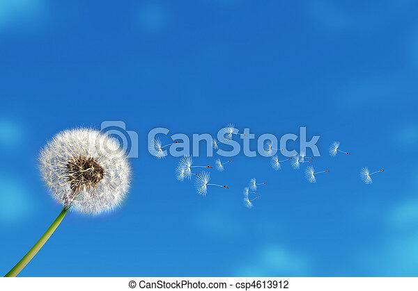 dandelion - csp4613912