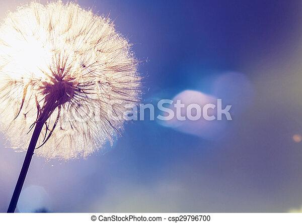 Dandelion - csp29796700