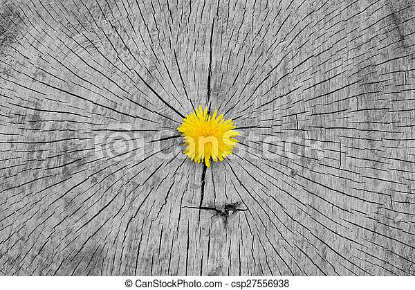 Dandelion - csp27556938