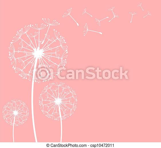 dandelion - csp10472011