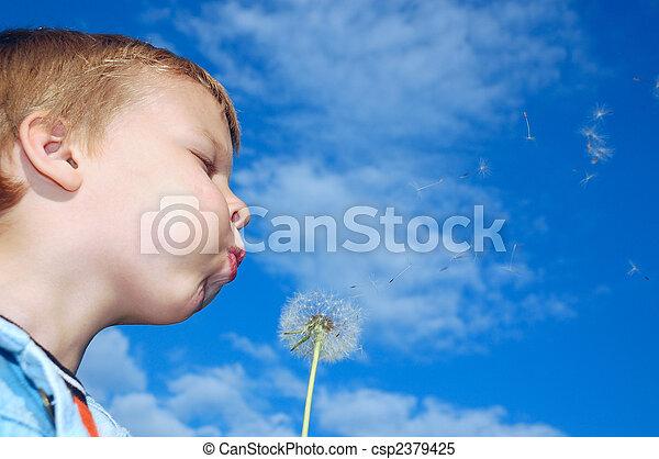 dandelion wishing - csp2379425