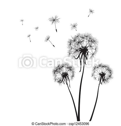 dandelions - csp12453096