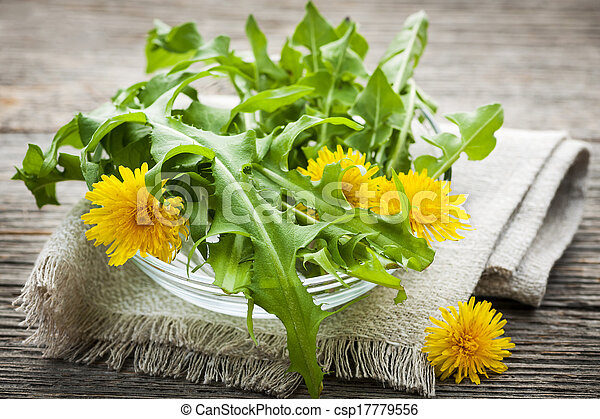 Dandelions greens and flowers - csp17779556