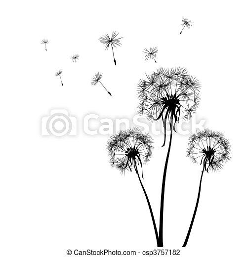 dandelions - csp3757182