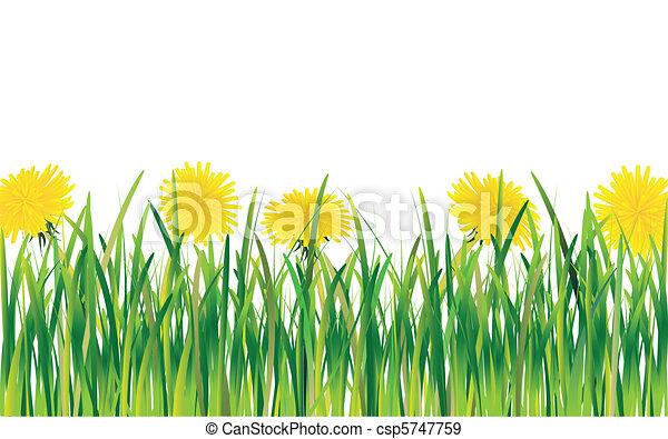 Dandelions in the Grass - csp5747759