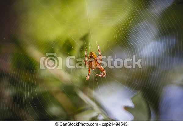 danger, toile, orange, centre, araignés - csp21494543