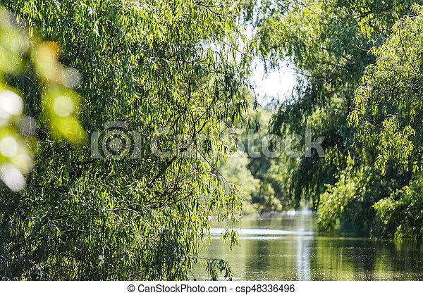 Danube Delta landscape - csp48336496
