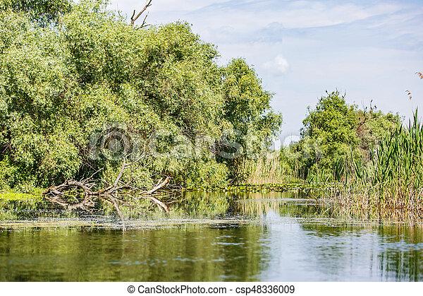 Danube Delta landscape - csp48336009