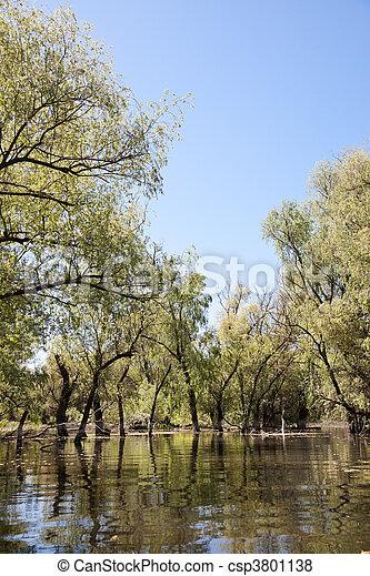 Danube Delta - csp3801138