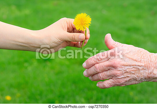 dar, sênior, dandelion - csp7270350