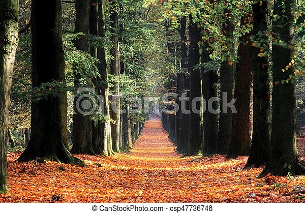 Dark autumn lane - csp47736748
