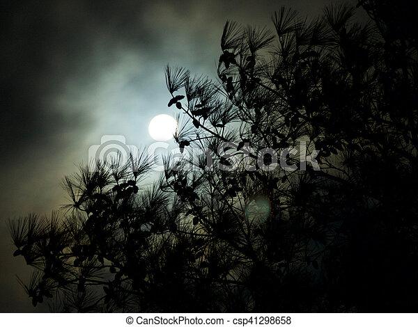 Dark Cloudy Full Moon Pine Tree Silhouette - csp41298658