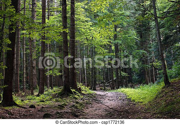 dark forest - csp1772136