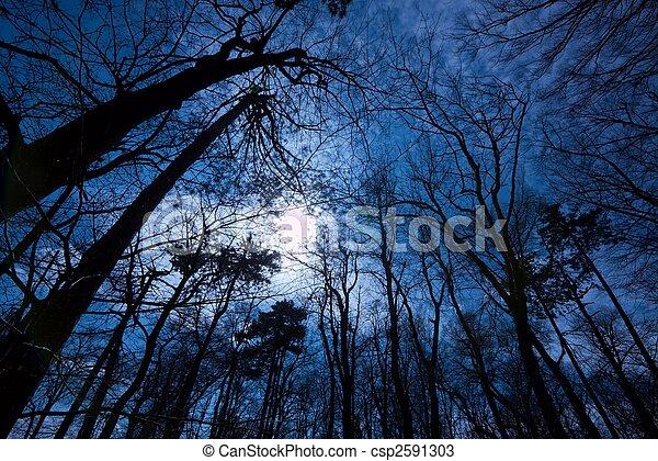 Dark Forest - csp2591303