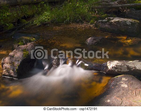 Dark Forest Water - csp1472191