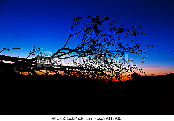 dark silhouette of a tree contrasting with beautiful sky at sunset. - csp39843988