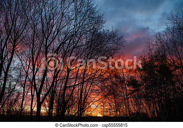 Dark silhouettes of trees and amazing cloudy sky on sunset - csp55555815