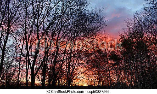 Dark silhouettes of trees and amazing cloudy sky on sunset - csp50327566