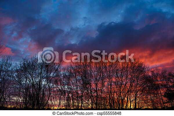 Dark silhouettes of trees and amazing cloudy sky on sunset - csp55555848
