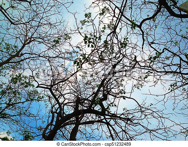 Dark silhouettes of trees - csp51232489
