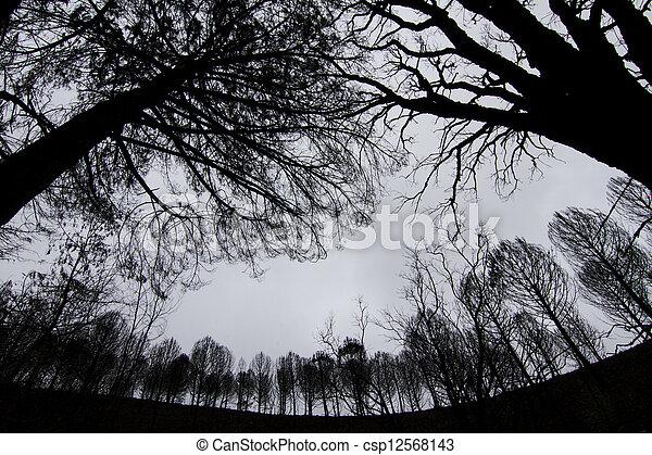 dark silhouettes of trees - csp12568143