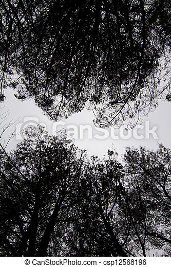 dark silhouettes of trees - csp12568196