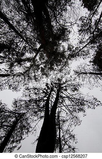 dark silhouettes of trees - csp12568207