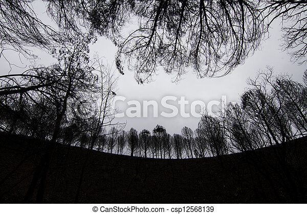 dark silhouettes of trees - csp12568139