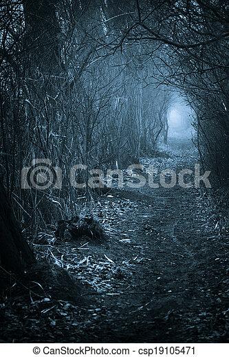Dark spooky passage through the forest - csp19105471