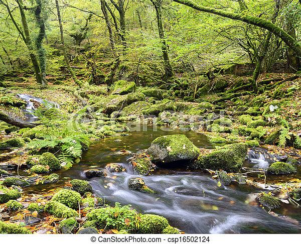 El arroyo Dartmoor - csp16502124