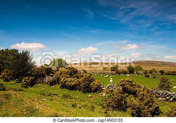 En los pastos de Dartmoor - csp14503133