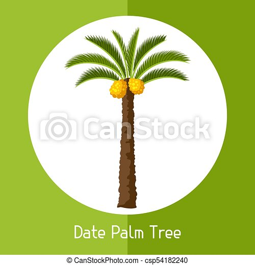 Dates Palm Tree Isolated On White Background Stock Photo - Download Image  Now - iStock