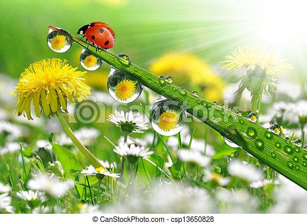 dauw, lieveheersbeestje - csp13650828