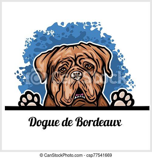 de, cane, bianco, bordeaux, dogue, testa, sfondo colore, razza - csp77541669