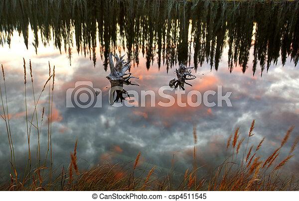 Reflejos de estanque en Columbia Británica - csp4511545